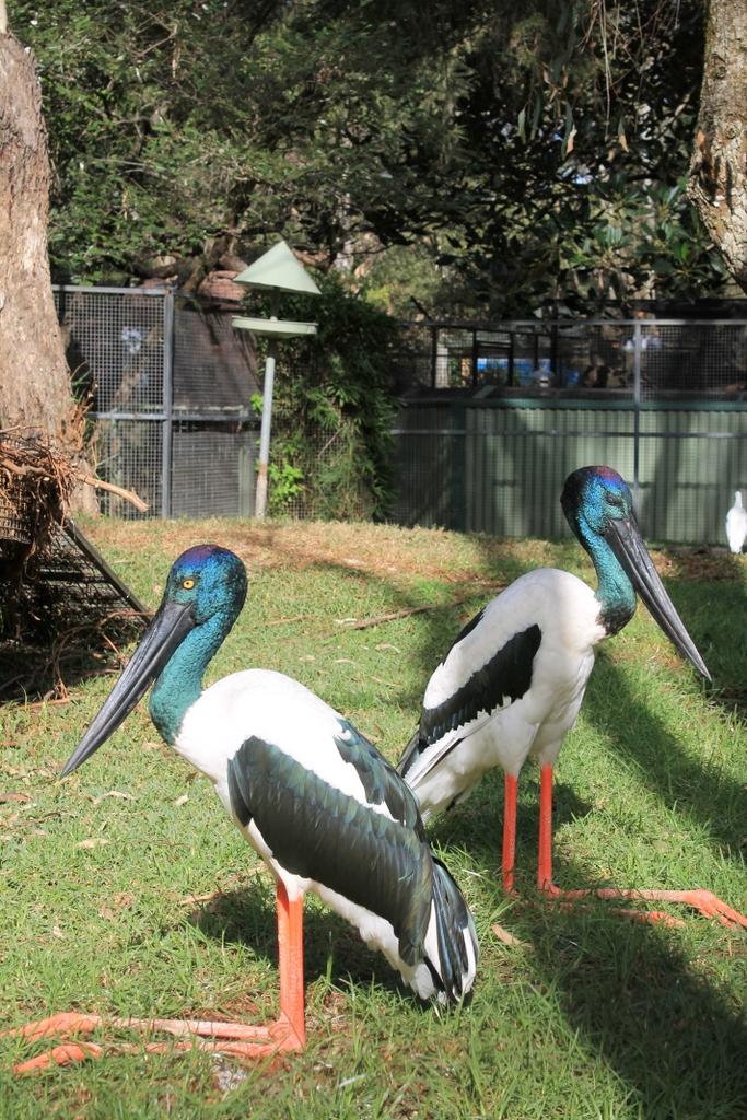 beautiful-birds-funny-symmetry-love