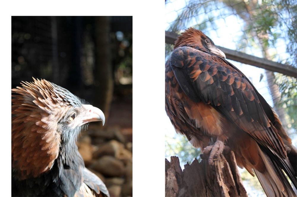eagle-collage