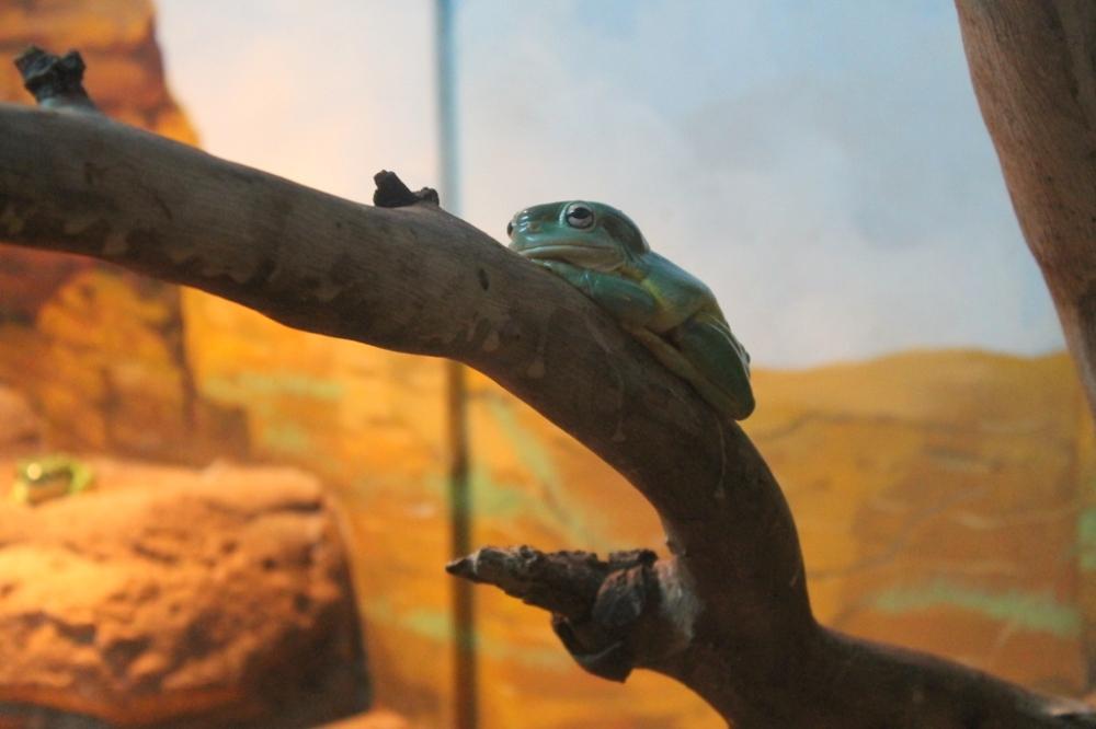 green-shiny-frog