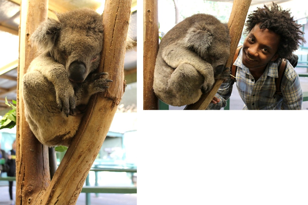 koala-collage