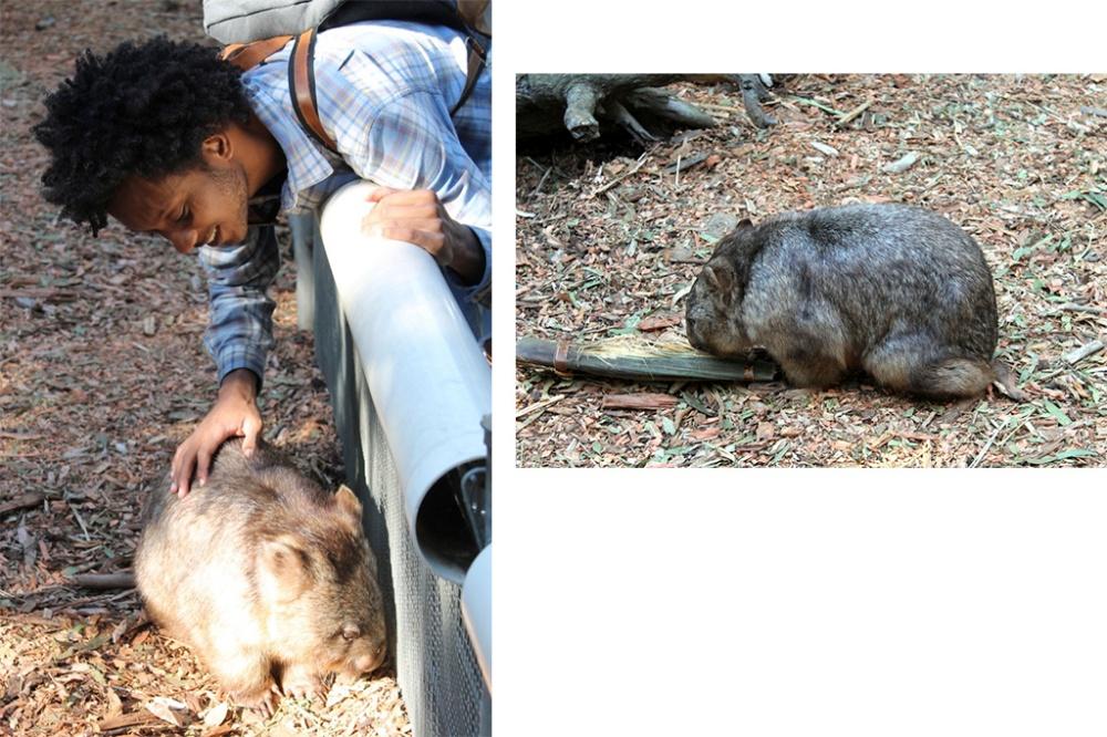 wombat-collage